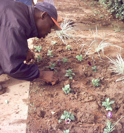 man plating some plants